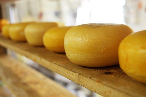 チーズで内臓脂肪が減る