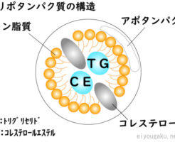 リポタンパク質の構造